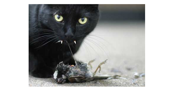 AmmoLand blog: Cat eating bird