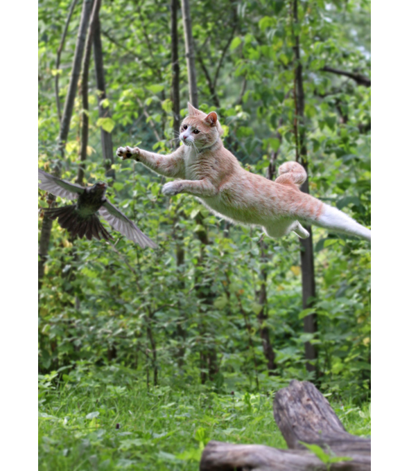 Photo of cat leaping after bird