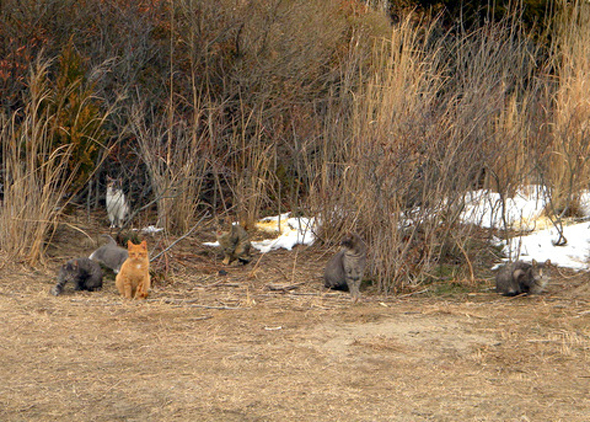 South Jersey Feral Cats
